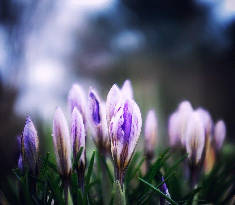 A bit of spring #140