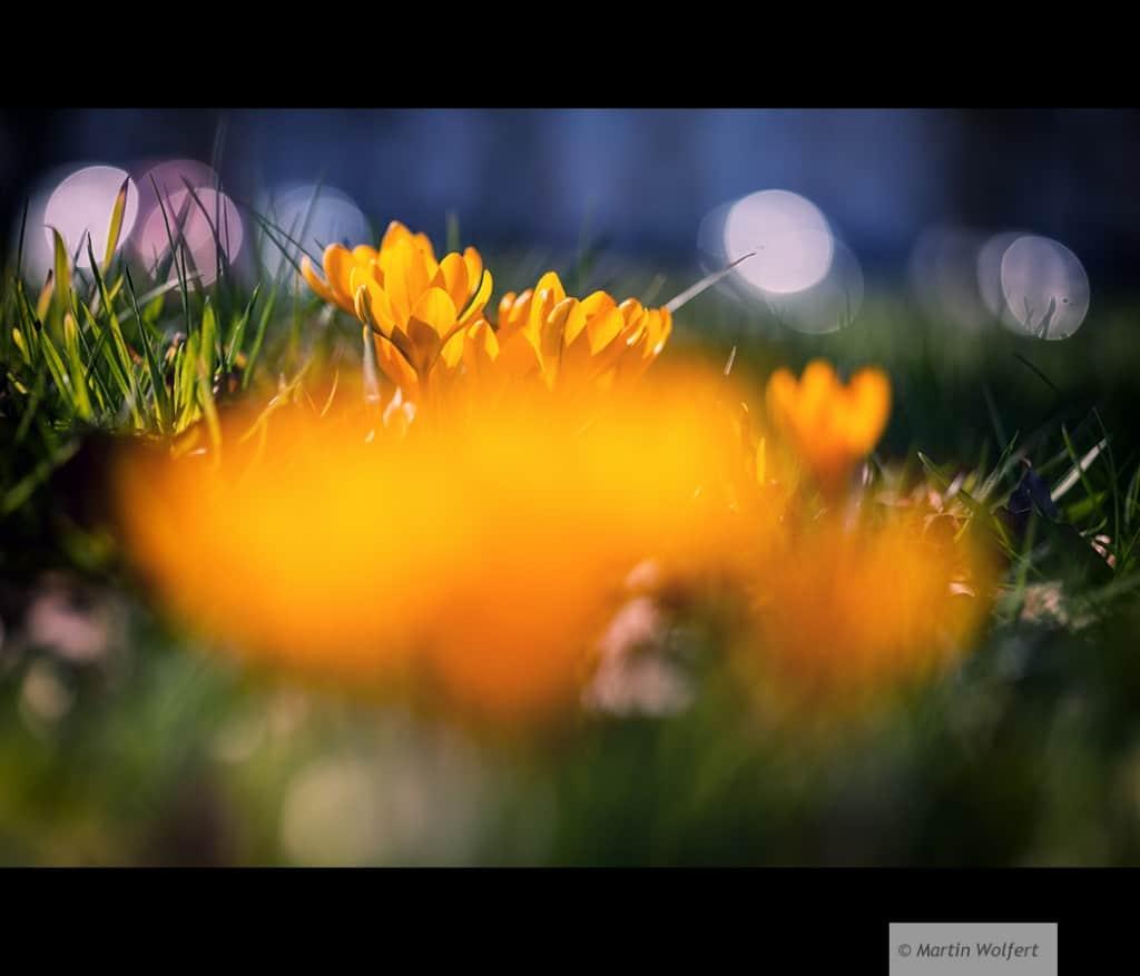 Tag #161 | A taste of spring