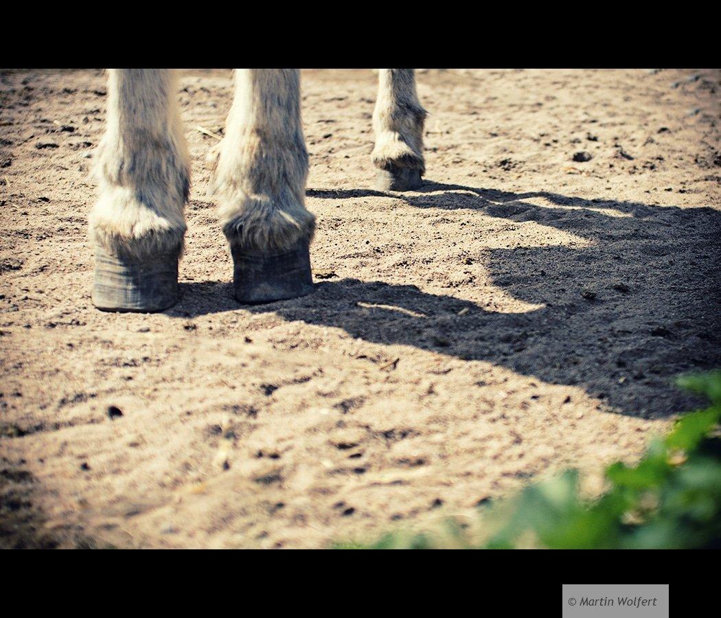 Tag #196 | Some feet