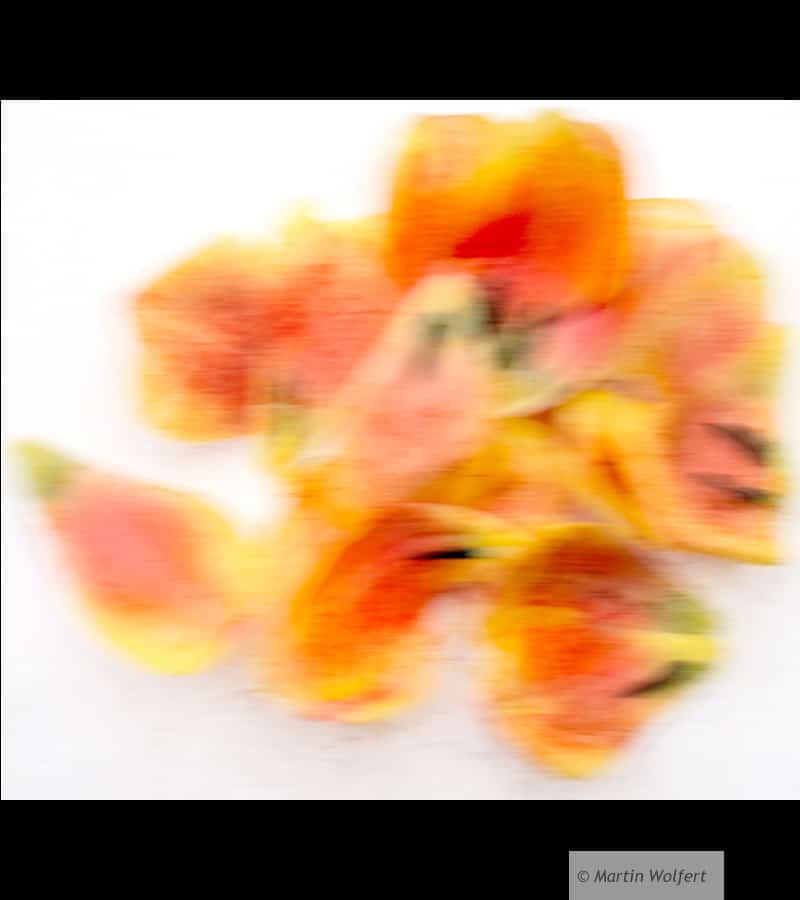 Tag #205 |Flowery