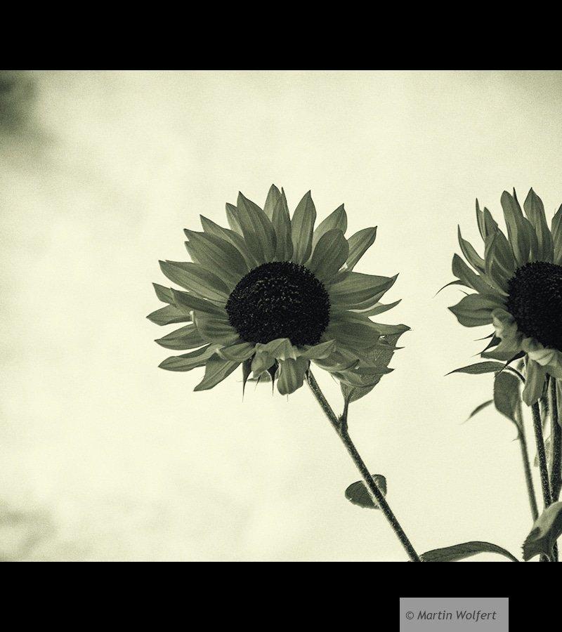 Backlightflowers #21