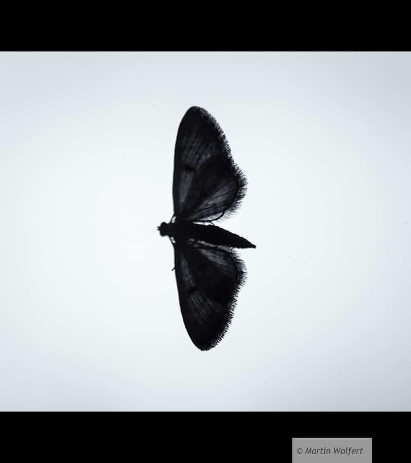 Tag #210 | Silver bird