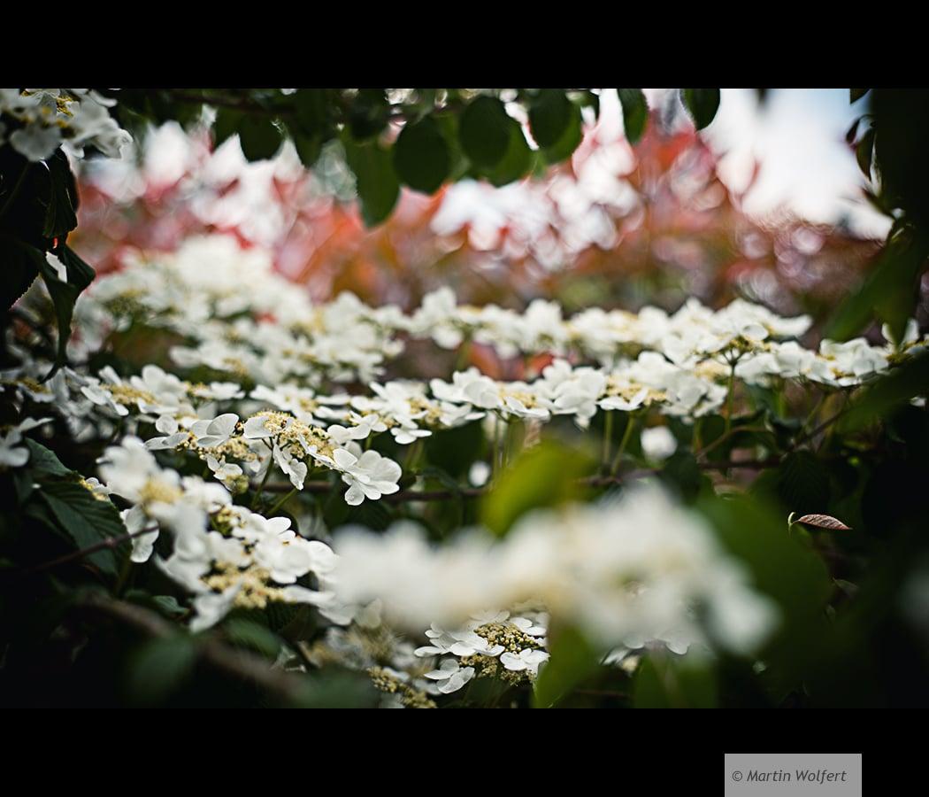 Sea of flowers #219