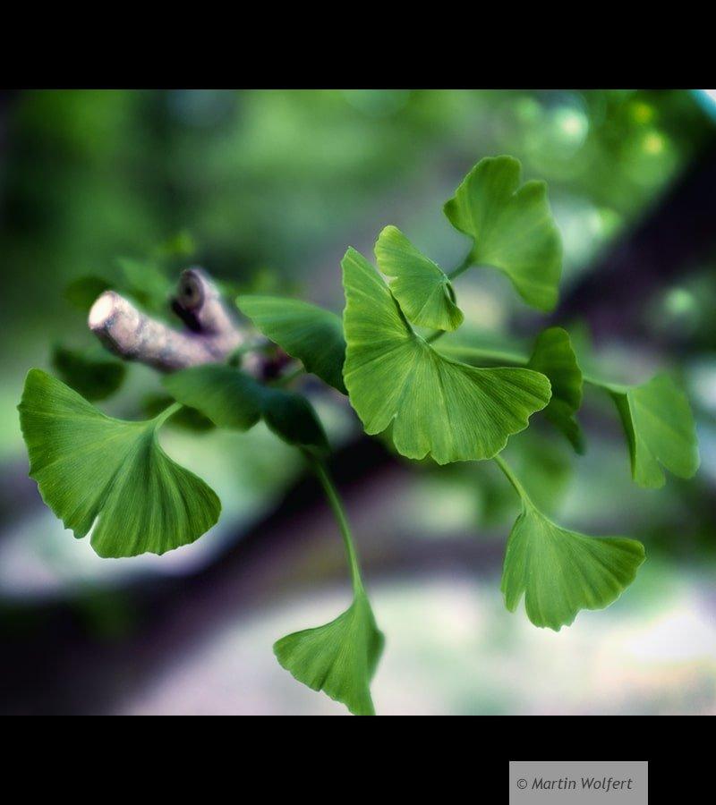 Tag #222 |Favorite tree