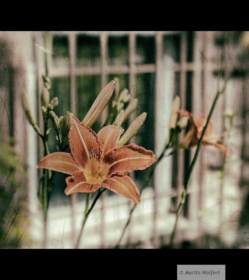Tag #251 | Fleur-de-lis