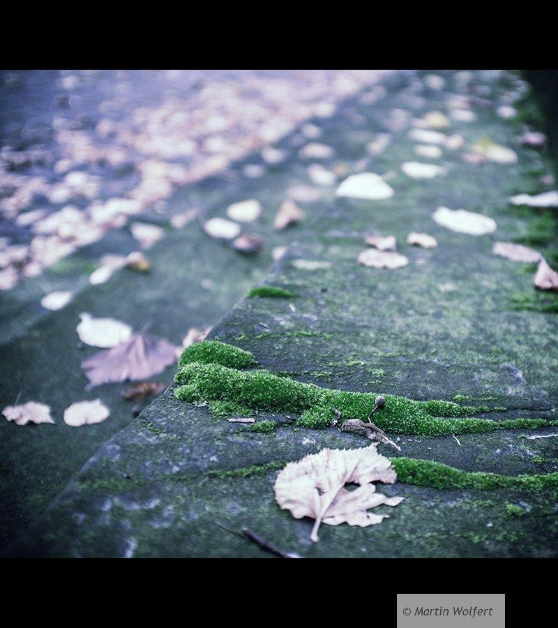 Tag #29   Autumn foliage