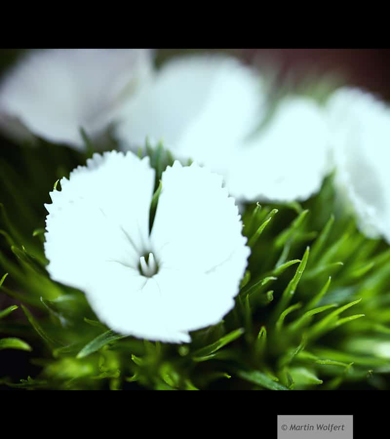 Tag #290 |White'n green