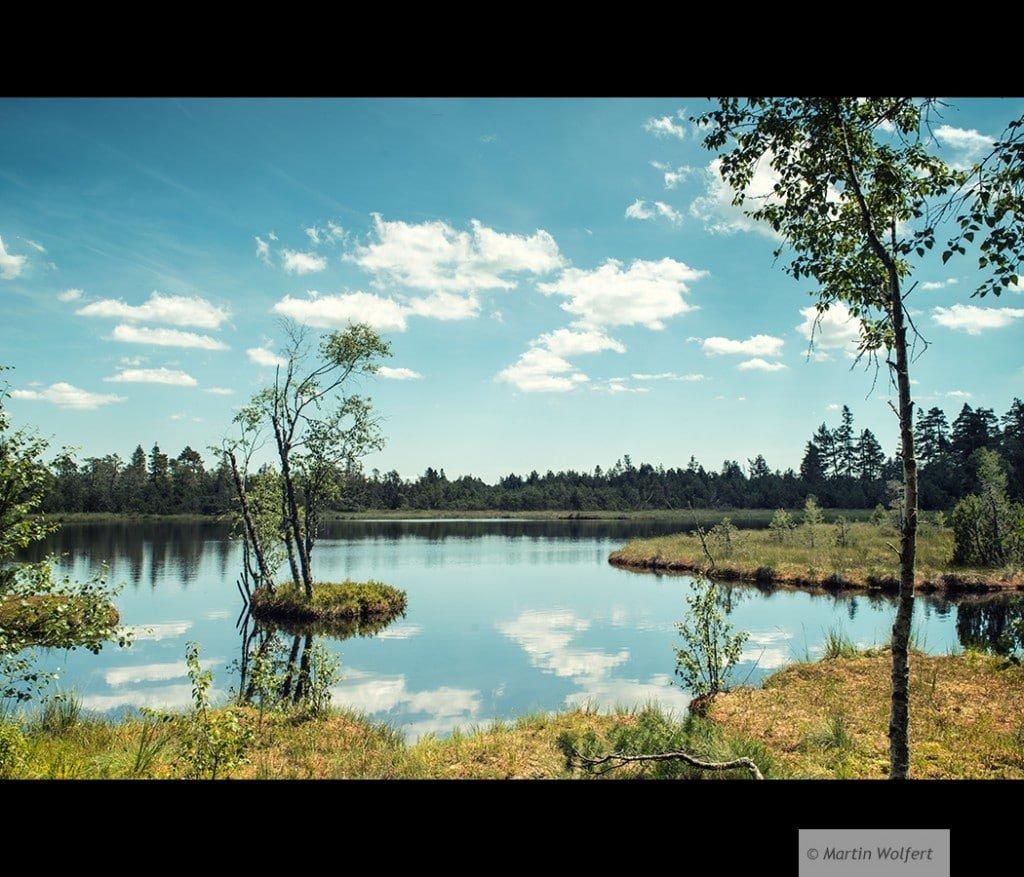 Tag #291 |Fen landscape