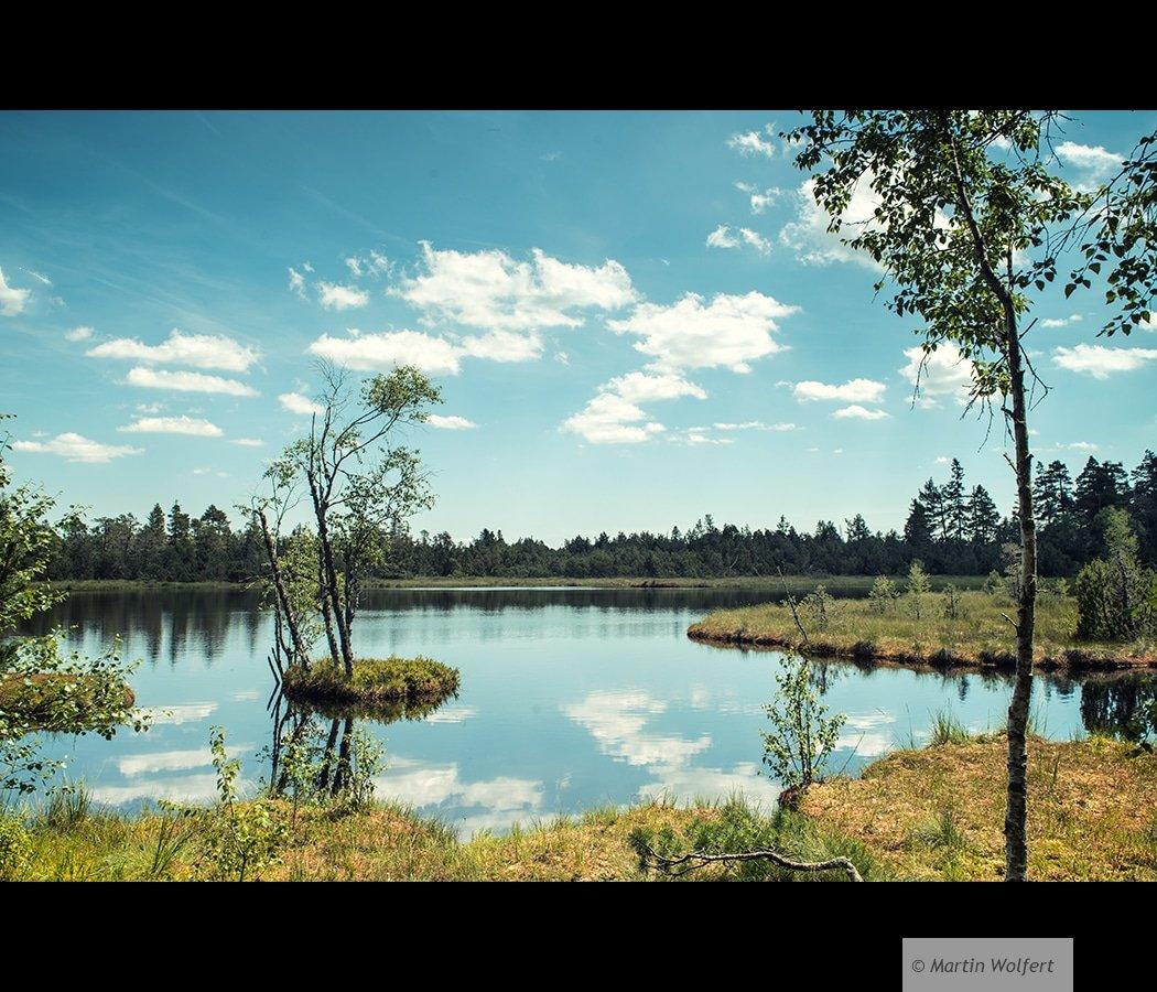 Fen landscape #192
