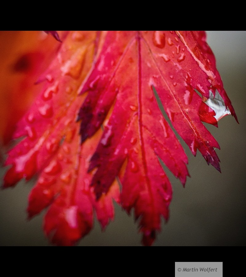 Raindrop in red #35