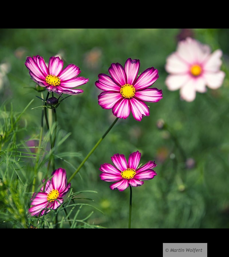 Tag #356 | Flower power