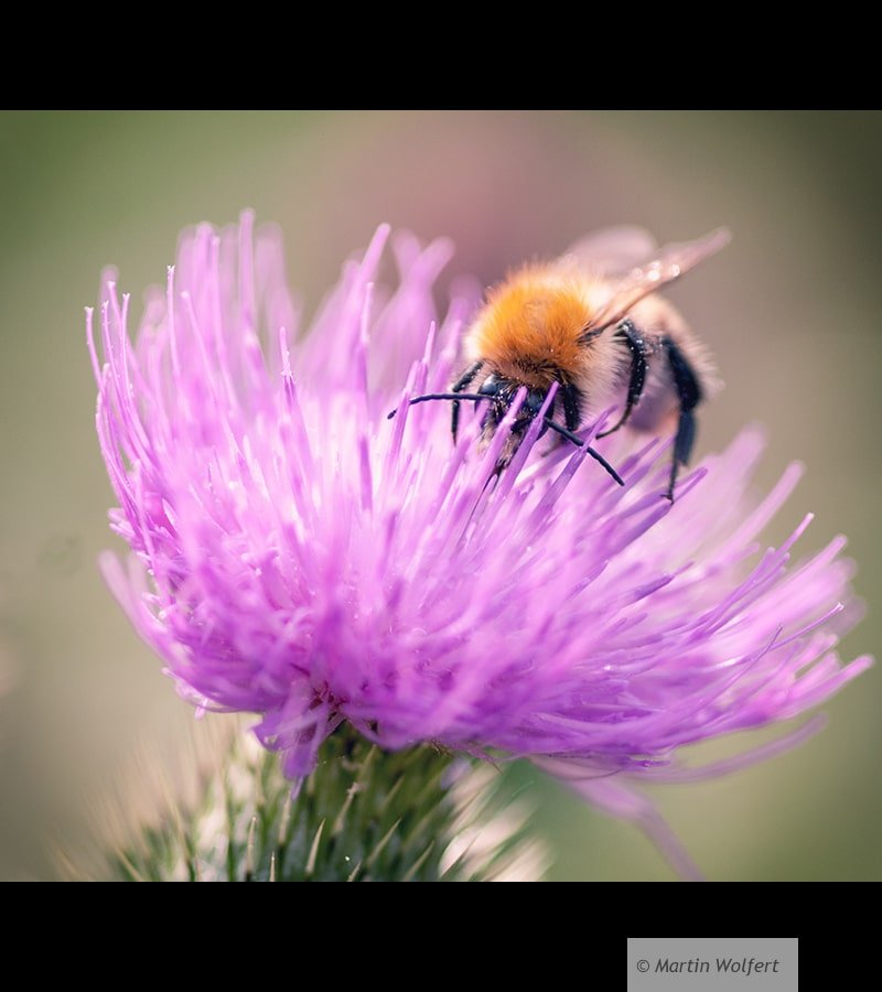 Tag #361 | Busy bee