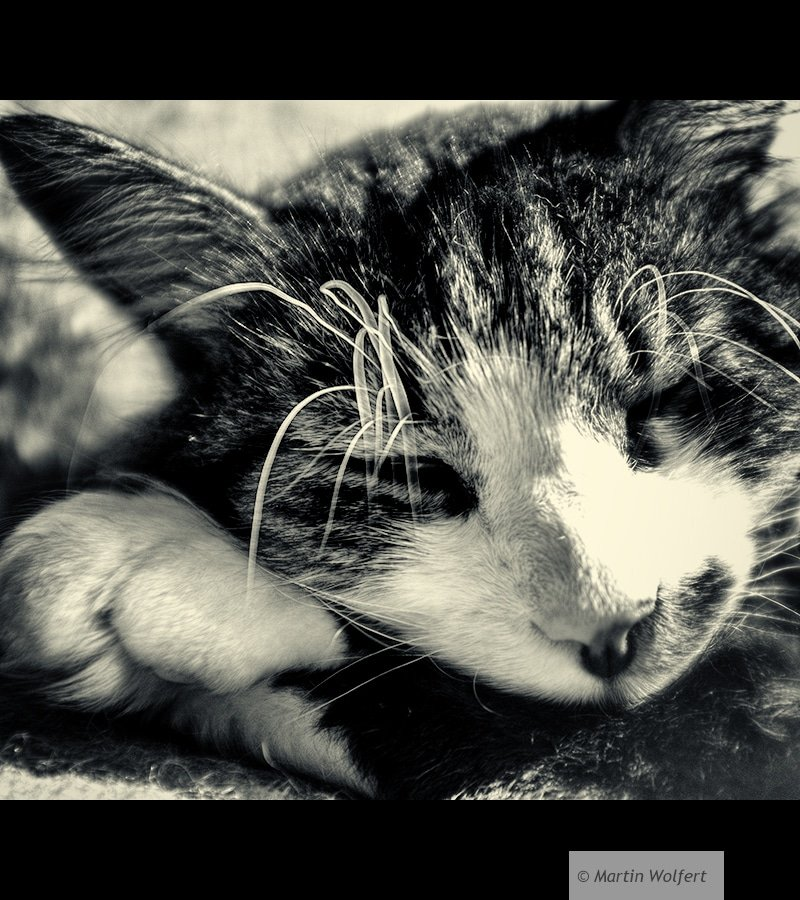 Tag #364 |Relaxed