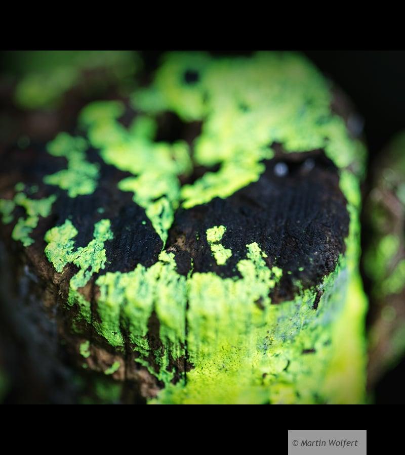 Green Aliens #8